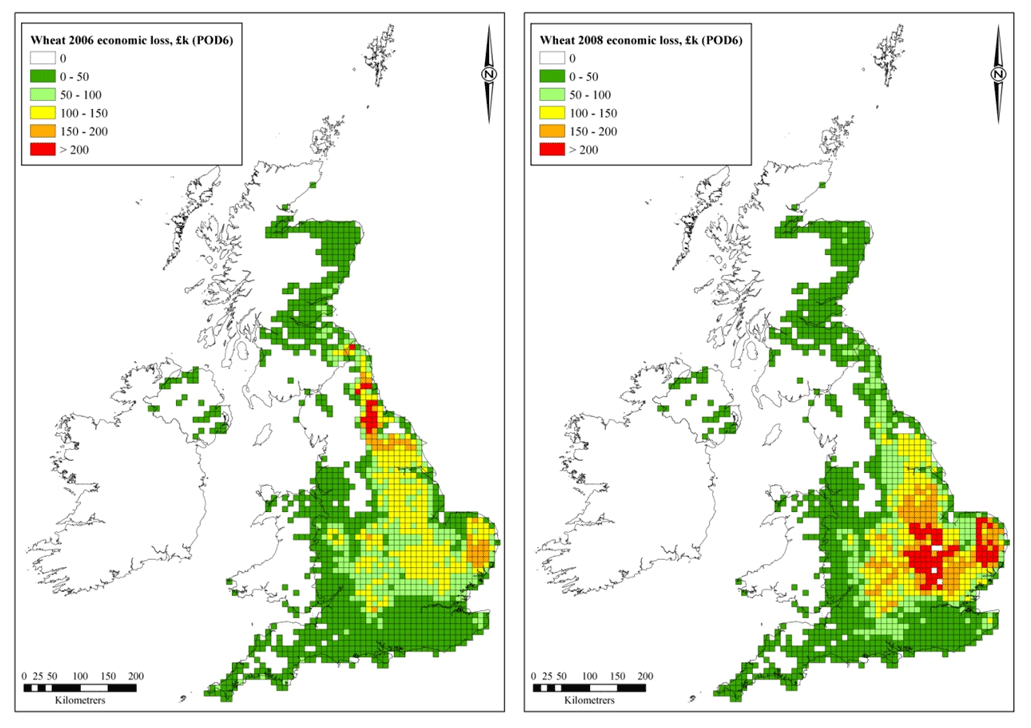 Spatial distribution of the impacts of ozone on wheat yield loss in 2006