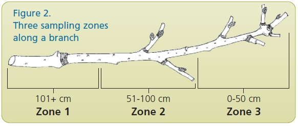 branch sampling zones